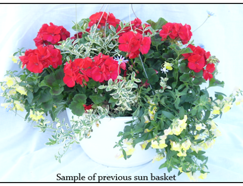 Flower Basket Fundraiser